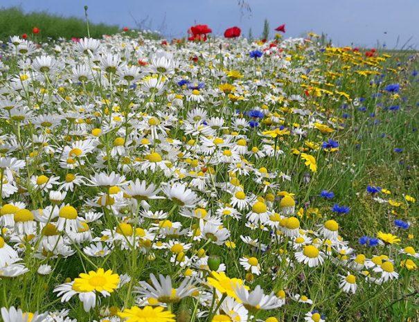 carousel-wilde-bloemen